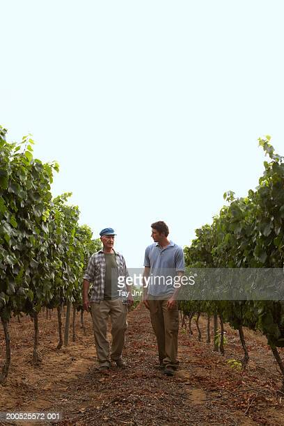 Senior father and son talking in vineyard