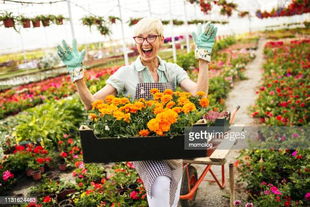 senior florist carrying basket full of flowers - old lady funny stock pictures, royalty-free photos & images