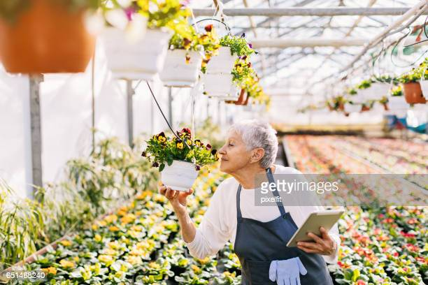 senior gardener with digital tablet smelling flowers - nariz humano imagens e fotografias de stock