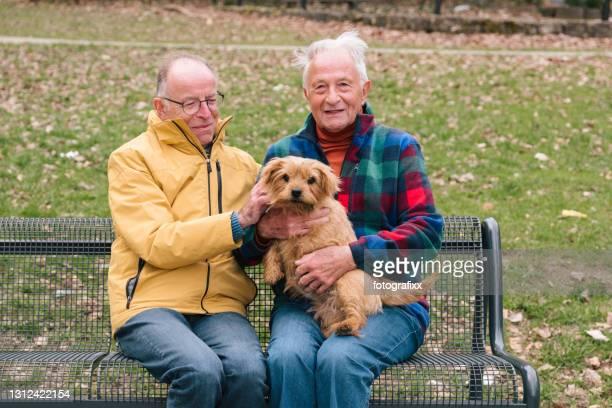 couples homosexuels aînés avec le crabot s'asseyent sur un banc de stationnement, fond rural - norfolk terrier photos et images de collection
