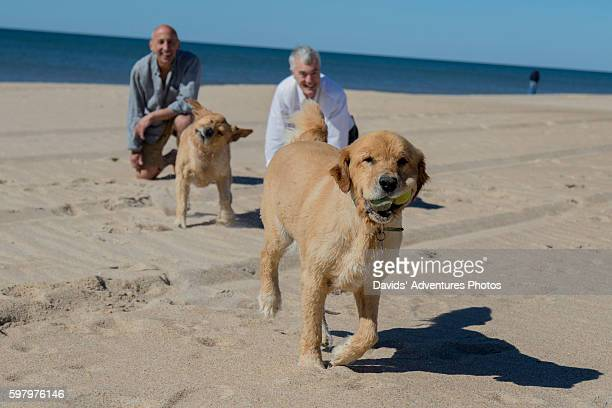 senior gay male couple playing with their dogs on the beach - gay seniors photos et images de collection