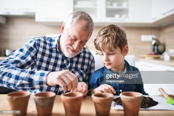 senior grandfather with small grandson sitting at the table at home, sowing seeds into flower pots. - seed stock pictures, royalty-free photos & images