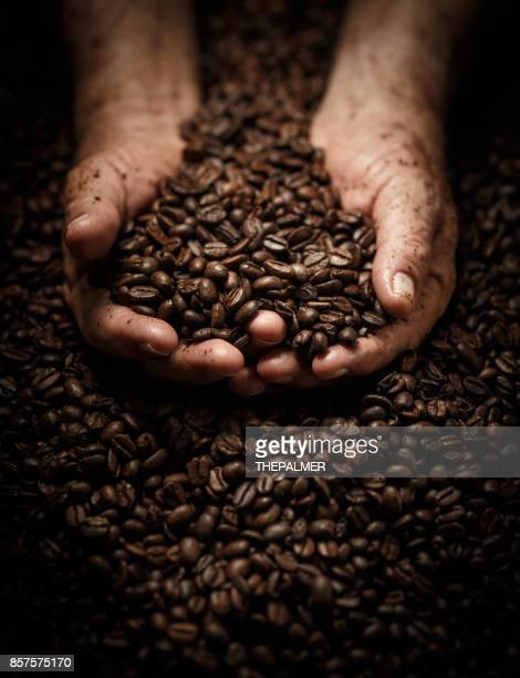 senior hands and toasted coffee beans - roasted coffee bean stock photos and pictures