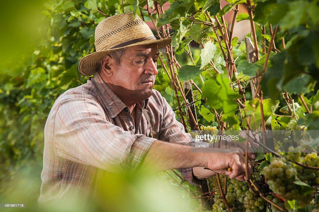 Sr Harvesting
