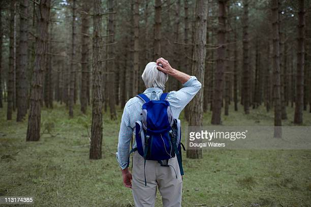 senior hiker lost in forest. - lost stock pictures, royalty-free photos & images