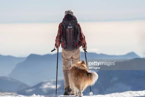 senior hiker on mountain snowy with dog - kanton graubünden stock-fotos und bilder
