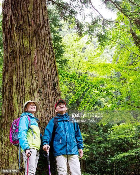 Senior Hiker Standing Below Huge Tree
