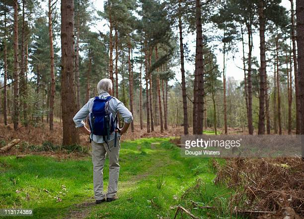 senior hiker standing in forest setting. - arms akimbo stock pictures, royalty-free photos & images
