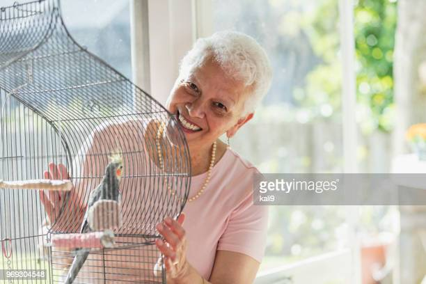 senior hispanic woman with pet bird in cage - cockatiel stock pictures, royalty-free photos & images