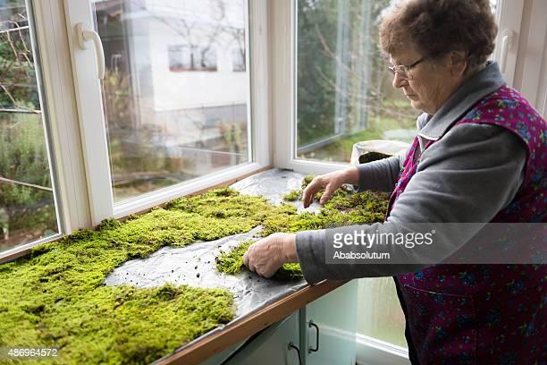 senior casalinga sdraiarmi di muschio per natività, slovenia, europa - natività foto e immagini stock