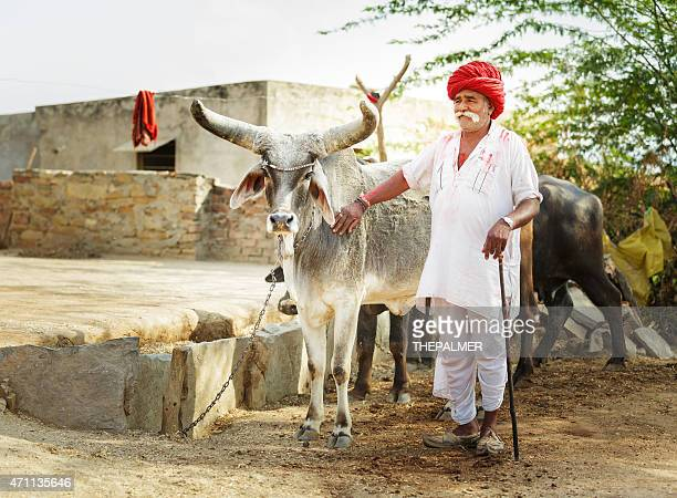 Senior Indian with his catle