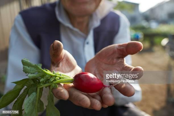 senior japanese working early in the morning - landwirtschaftliche tätigkeit stock-fotos und bilder
