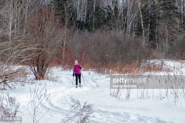 senior lady enjoying cross country skiing on a classic winter day - murray mccomb stock pictures, royalty-free photos & images