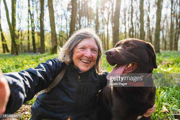 a senior lady takes a selfie her with chocolate labrador dog - positive emotion stock pictures, royalty-free photos & images