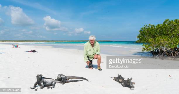 mayor mirando iguanas marinas en la playa pública de galápagos - isla de santa cruz islas galápagos fotografías e imágenes de stock