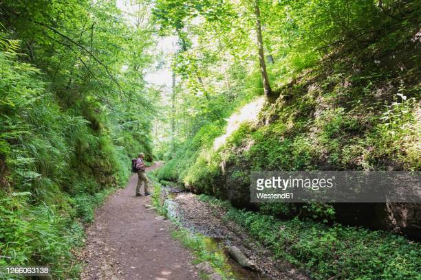 senior male hiker standing on road amidst trees in thuringia forest, germany - アイゼナッハ ストックフォトと画像