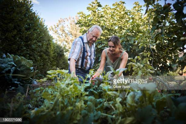 senior man and adult daughter caring for plants in garden - daughter stock pictures, royalty-free photos & images