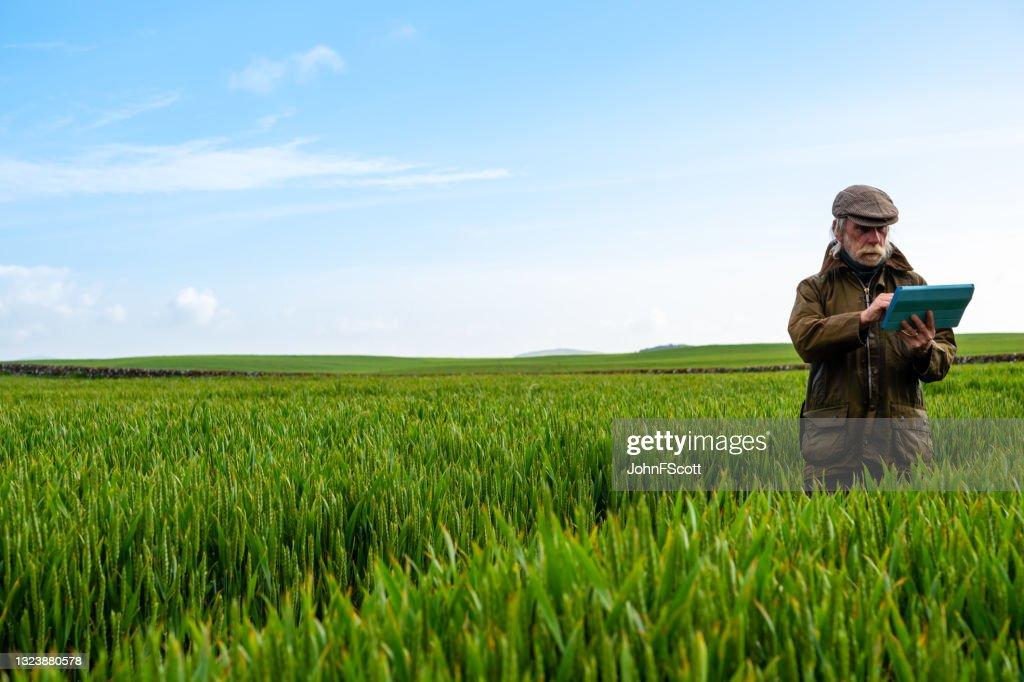 Senior man checking his digital tablet : Stock Photo