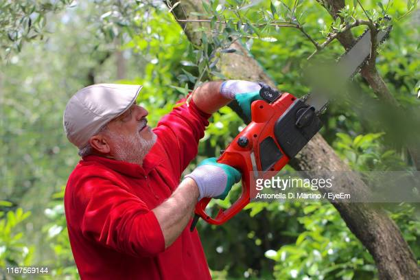 senior man cutting tree in forest - antonella di martino foto e immagini stock