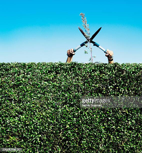 senior man cutting twig on hedge - hedge stock pictures, royalty-free photos & images