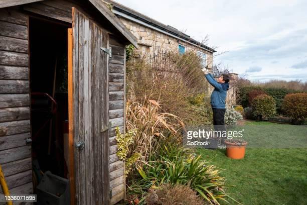 senior man de-weeding the garden - one senior man only stock pictures, royalty-free photos & images