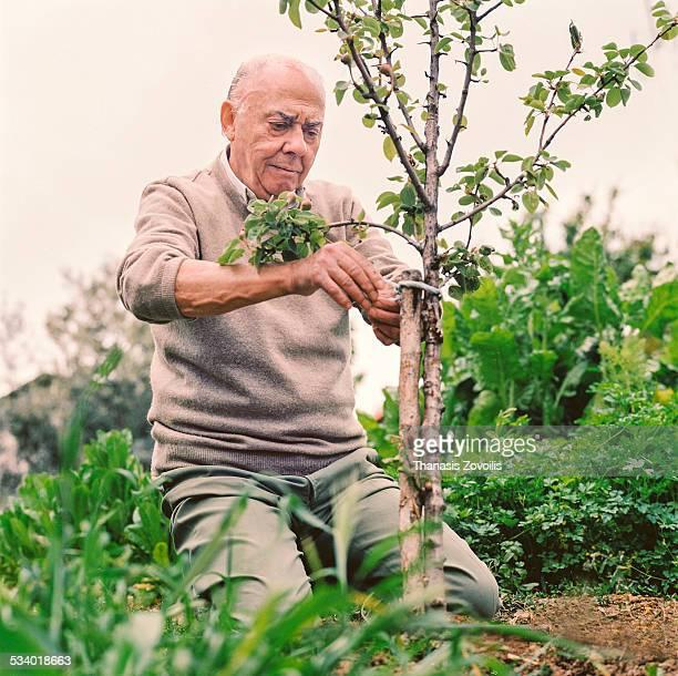 senior man doing gardening work - kneeling stock pictures, royalty-free photos & images