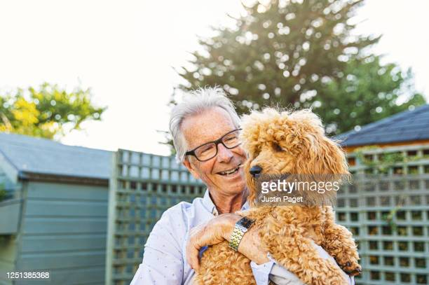 senior man embracing his pet poodle - barboncino nano foto e immagini stock