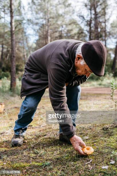 senior man finding mushroom in the forest - bending over stock pictures, royalty-free photos & images
