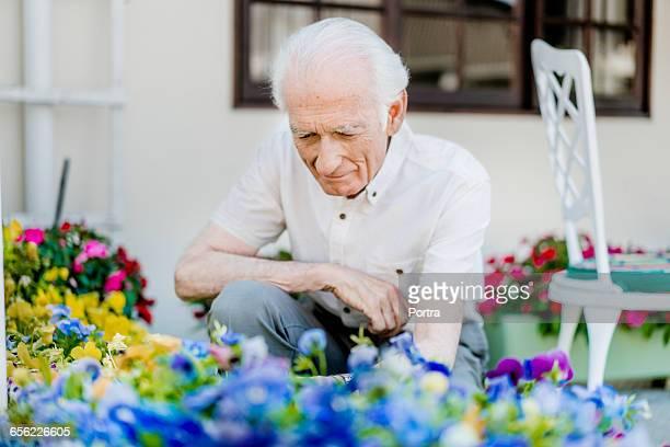 Senior man gardening in back yard