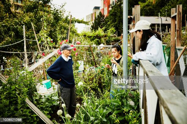 Senior man giving young volunteers vegetables to sample while working in community garden