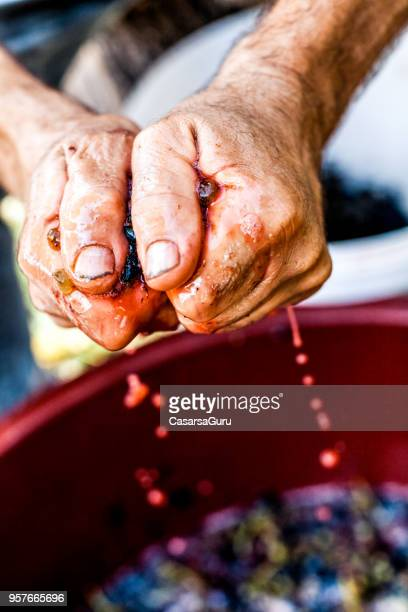 senior man hands squeezing wine grapes - grape stock pictures, royalty-free photos & images