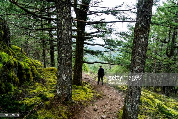 A Senior Man Hiking through a forest in Canada