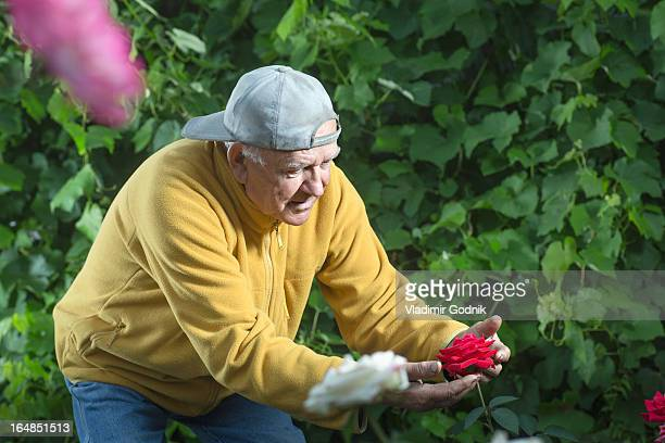 A senior man holding a rose carefully while examining it in his garden