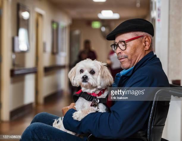 senior man holding dog in wheelchair - 訓練犬 ストックフォトと画像