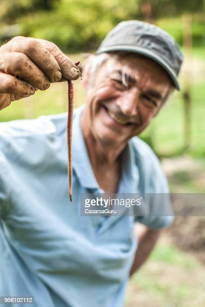 senior man holding earthworm - earthworm stock pictures, royalty-free photos & images