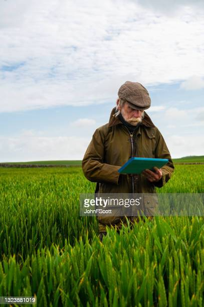 senior man in a field with a digital tablet - johnfscott stock pictures, royalty-free photos & images