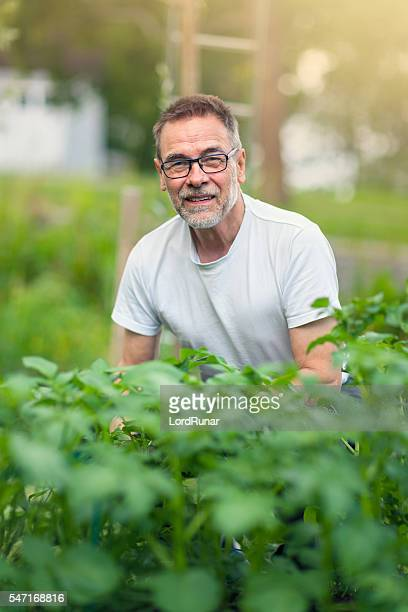 Senior man in his vegetable garden