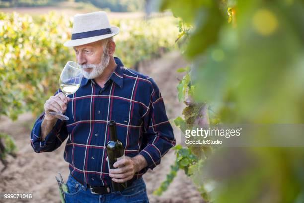 hombre senior en su viña - chardonnay grape fotografías e imágenes de stock