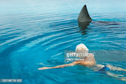 Senior Man In Swimming Pool By Model Great White Shark Rear View Stock Photo Getty Images