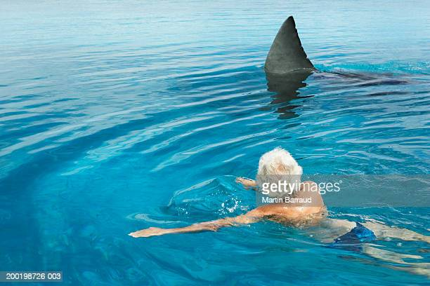 senior man in swimming pool by model great white shark, rear view - sharks stock pictures, royalty-free photos & images