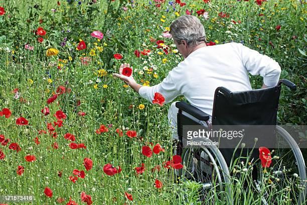 Senior man in wheelchair on blooming meadow touching flowers