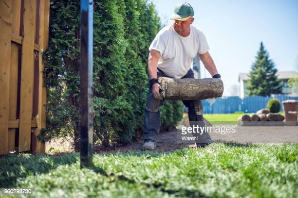 年配の男性が新しい芝生の芝を敷設