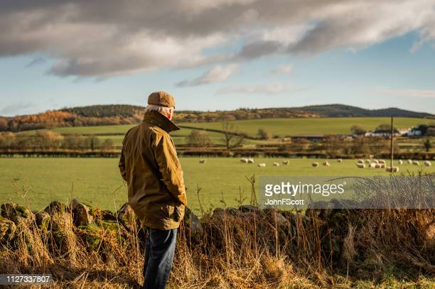 senior man looking at field with sheep - flat cap stock pictures, royalty-free photos & images