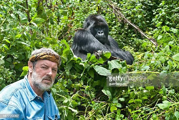 Senior man next to a Silverback Mountain Gorilla, wildlife shot