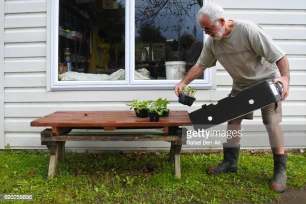 Senior man nursing young plants