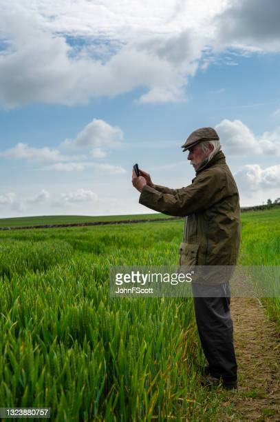 senior man photographing a cereal crop - johnfscott stock pictures, royalty-free photos & images