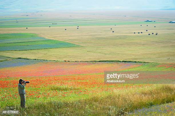 senior man photographing beautiful fower fields in piano grande, italy - umbria stock pictures, royalty-free photos & images