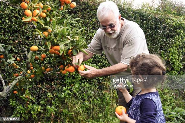 Senior man picks fruit with his granddaughter