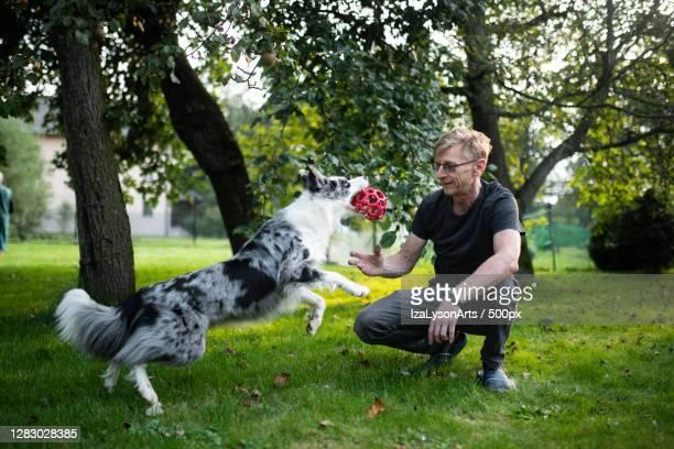 senior man playing with border collie dog,poland - collie fotografías e imágenes de stock