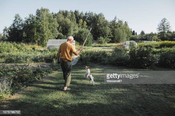 senior man playing with dog in garden - einzelner senior stock-fotos und bilder